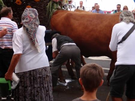 31. La muls de vaca.JPG