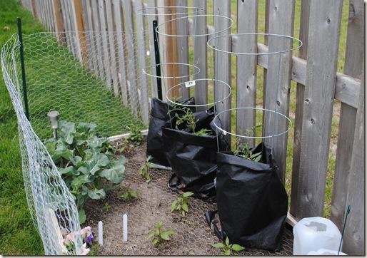 Garden May 18 (5)