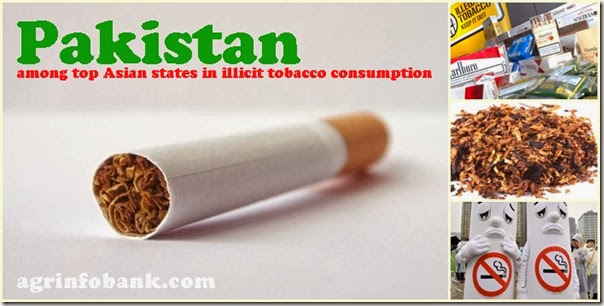 among top Asian states in illicit tobacco consumption