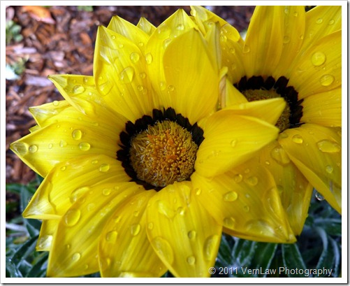 Flowerfillp1020327