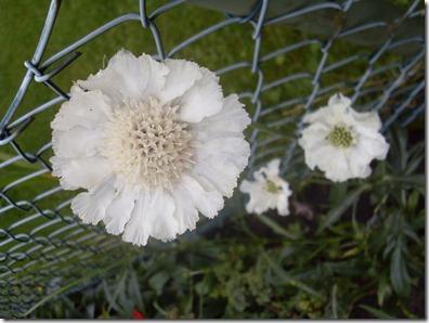 2012_07 Blumen im Garten (8)