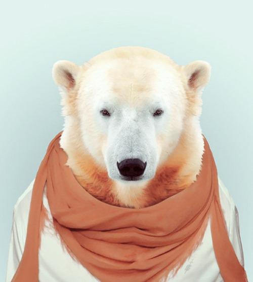 animais roupas humanas - urso branco