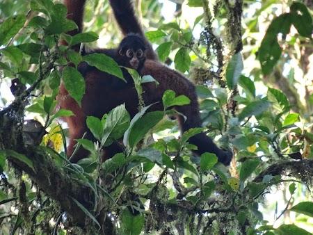 13. Maimuta cu puiul.JPG
