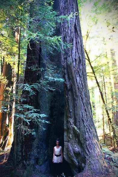 redwood 6
