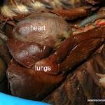 heart_lungs02_L.JPG