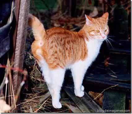 gato señala territorio