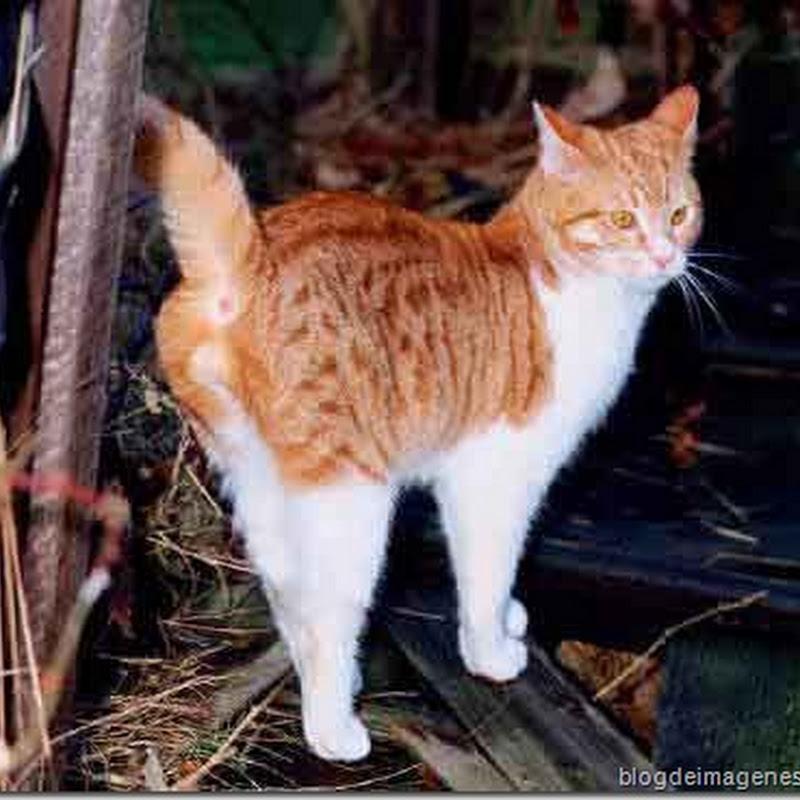 Como quitar el olor nauseabundo de gato marcando territorio