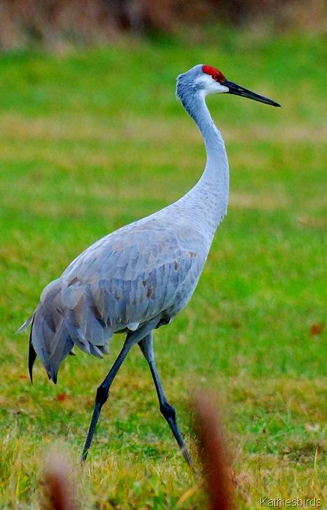8. crane-kab