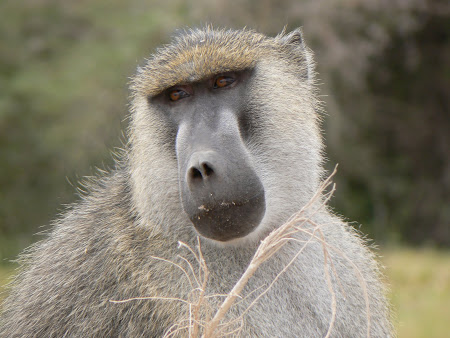 Safari: Naivasha
