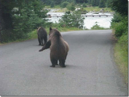 Brown Bears on Lutak Rd. 8-17-2011 7-58-11 PM 3264x2448