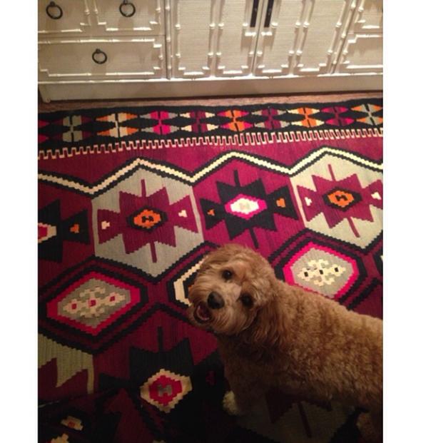 Paloma Contreras Design | Paloma's Dog, Tate via La Dolce Vita