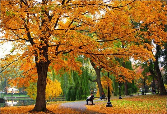 Boston-Commons-Fall_2