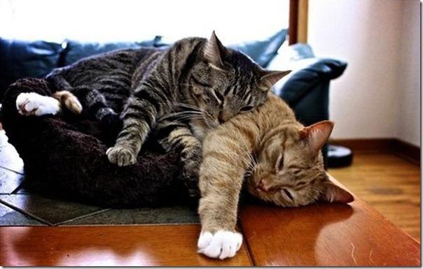 Gatos dormindo (17)