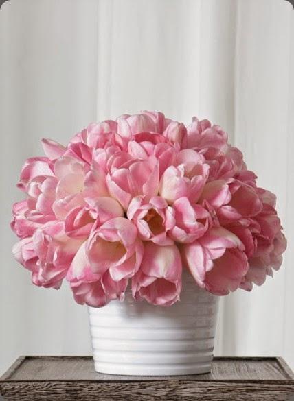 tulips 28199_417880751662_6780679_n jackson durham flowers