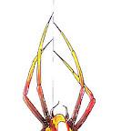 spiders-13.jpg