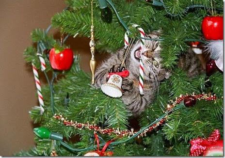 pets-hate-christmas-020