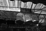 Shanghai - Pets market -  les cages suspendues