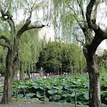 ueno park in Ueno, Tokyo, Japan