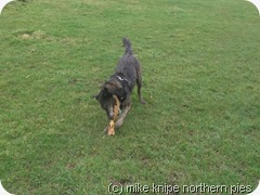 stick destruction NVQ Level 2