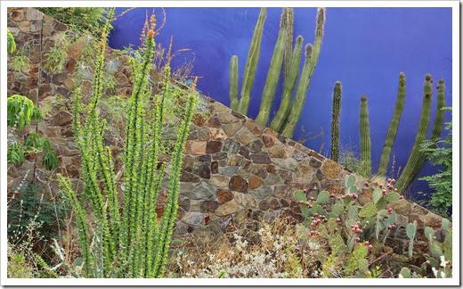 120728_ArizonaSonoraDesertMuseum_283