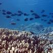 koral_37.jpg