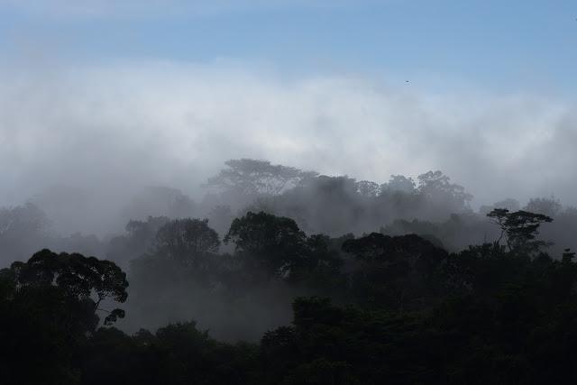 Après la la pluie. Les Carbets de Coralie (Crique Yaoni), 2 novembre 2012. Photo : J.-M. Gayman