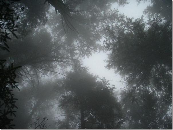 Florestas sombrias (11)