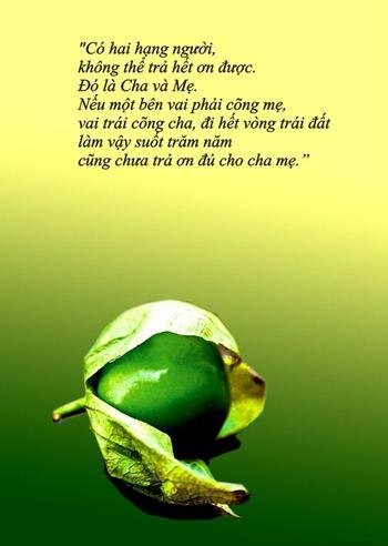 thiep-vu-lan-bao-hieu-cha-me (1)