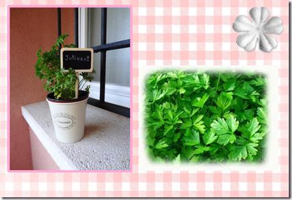 plantas aromaticas (page 3)