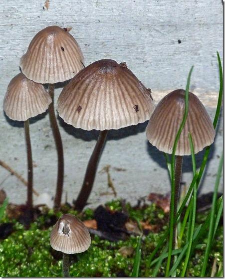 Mushrooms and Moss 2