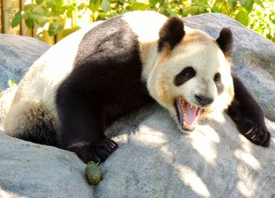 Da mao yawn