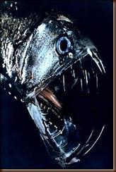 a60_Viperfish2