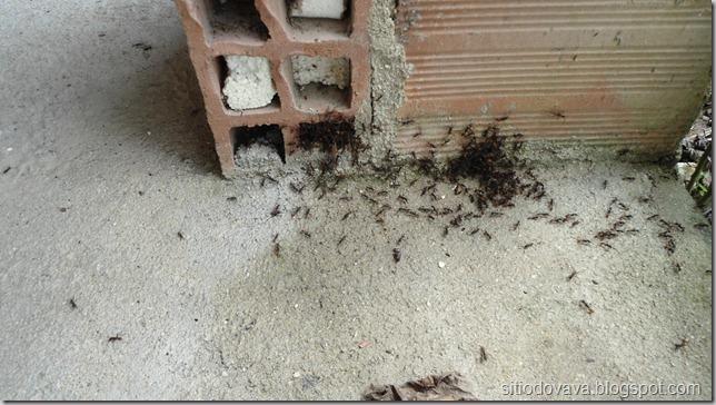 a invasão das formigas
