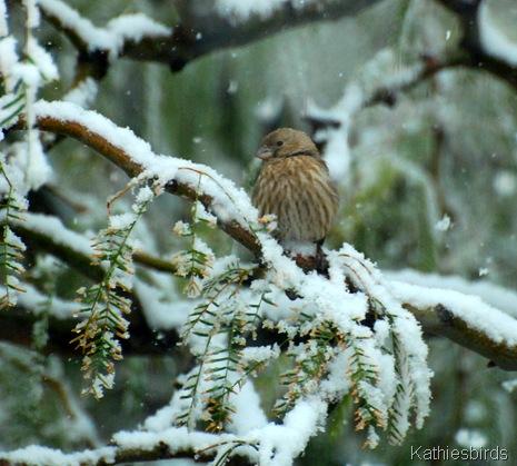 1. HOFi in snow-kab