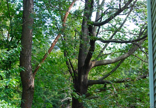3. trees-kab