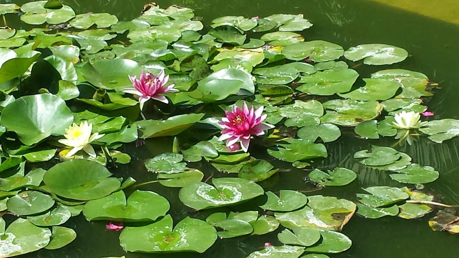 Viaggiare nel mondo le jardin majorelle for Pesci rossi in giardino