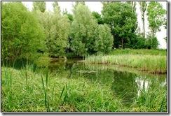 Ufton Fields D200  15-06-2011 14-56-51
