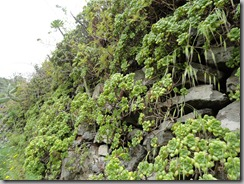 Muro poblado de Bejeques