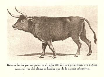 Uro Ortega y Gasset 001