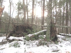 Blizzard 2.12.2013 uprooted tree on U Einos land2