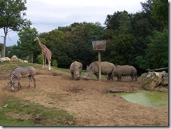 2004.08.25-049 rhinocéros