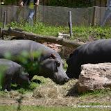 Safaripark_130527-022.JPG