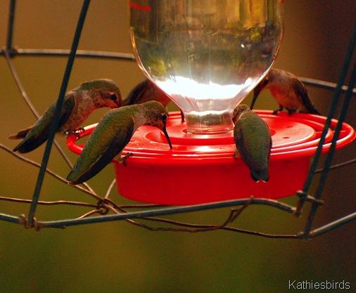 18. hummers-kab