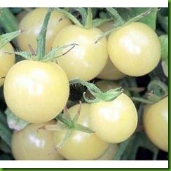 Tomate Cereja Branca