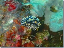 Diving south of Lamen Bay_06 21 14_0058