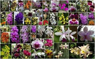 orchid overview