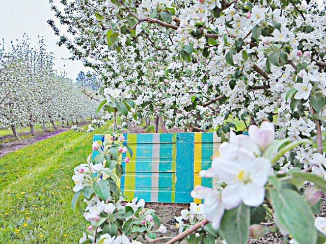 karmen orchard