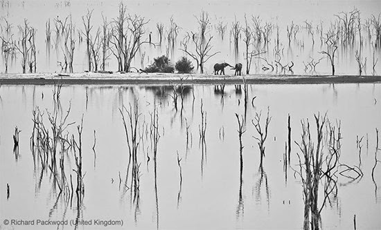 Fotos Vida Selvagem 2013 j