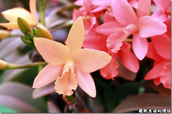 2012台南蘭花展27