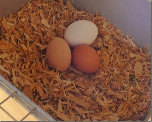 eggs 003